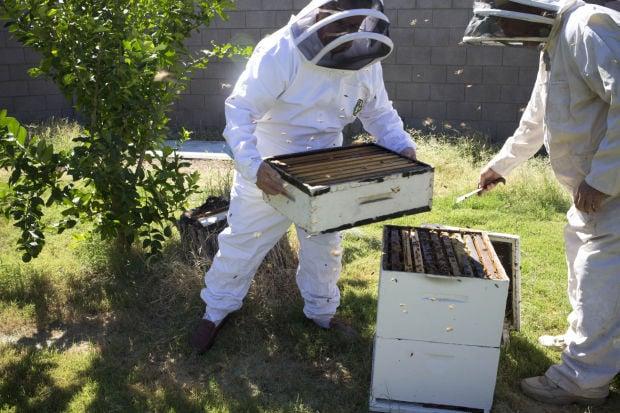 Arizona honeybees making a comeback