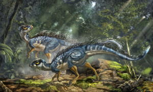 Feathered dinosaurs appear to be more common than previously thought