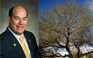 Fact check: State Reps say trees steal water
