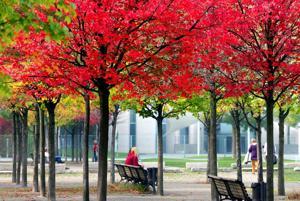 Photos: Autumn colors around the world