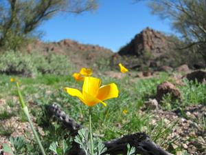 March was second warmest for Tucson