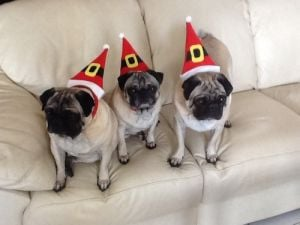 Photos: 2013 pet holiday photo contest entries