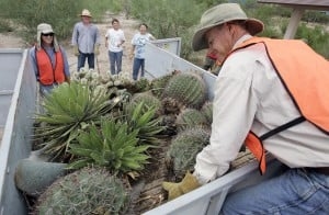 Pima Prickly Park set to open Saturday with native trees, cacti