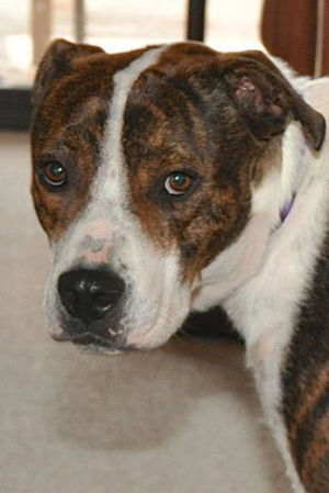 Sahuarita unhappy with cost of Pima animal control