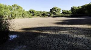 San Pedro pond, a big draw for bird-watchers, goes dry