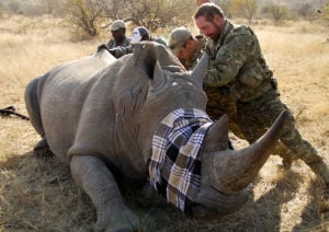 "Oro Valley man rescues rhinos on new reality TV show; Craig Sawyer is star of Animal Planet series ""Battleground: Rhino Wars"""