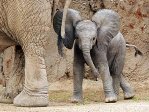 Photos: Baby elephant debuts at Reid Park Zoo
