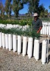 Pima County's 'tall pots' seeding faster growth, saving money