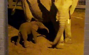 Readers guess the weight of Reid Park's newborn elephant