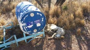 Border volunteers find 'gory' vandalism at water stations