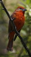 The Best of Arizona: Sites for bird watching