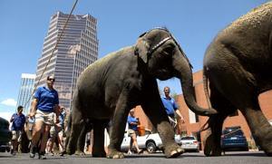 Photos: We'll never forget circus elephants in Tucson