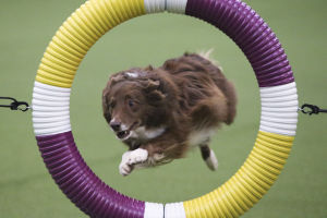 Photos: Dog show agility at Westminster