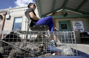 County money sought to end feral cat euthanasia