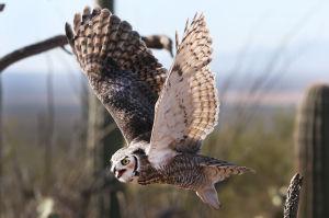 Photos: Raptor Free Flight