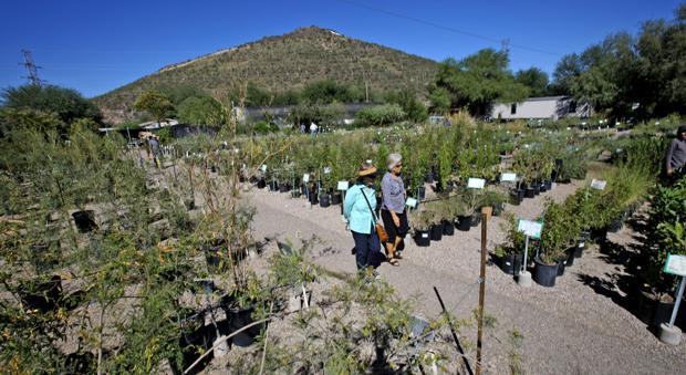 Photos: Desert Survivors Fall Plant Sale