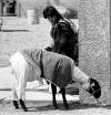 Tucson Time Capsule : sheepish showmanship