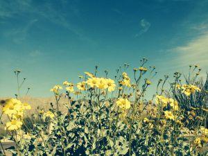 Tucson weather: Weekend warming trend