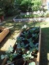 I need advice on building planter boxes for vegetables