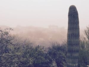 Photo of the day: Another foggy Tucson morning