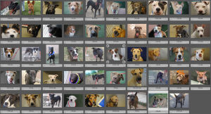 Pima Animal Care Center eliminates adoption fees for 72 dogs and cats