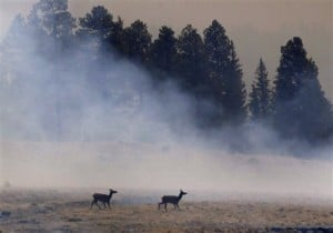 Photo gallery: The Wallow Fire