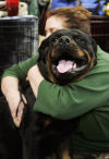Most popular dog breeds of 2012