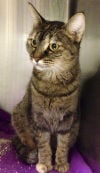 120513-nw-pets-p5