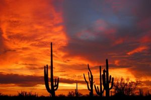 Star reader sunset photo contest entries