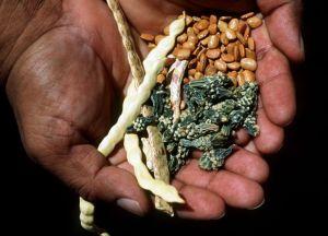 Big Jim: Native Seeds/SEARCH