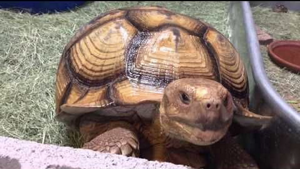 RTA gets $400,000 proposal for tortoise tracking