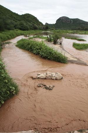 Persisten tóxicos en presa de Sonora