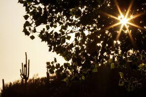 Photos: Catalina State Park