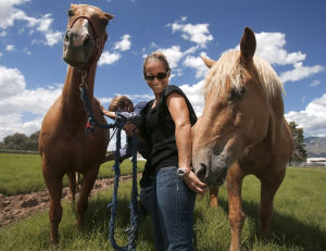 UA veterinary program aims to start up in 2015
