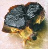 Sweet, savory black garlic showing up on menus but remains a mystery to most of general public
