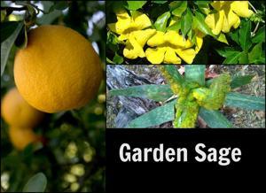 Long-living grapefruit; mite detection tough; cat claw vines