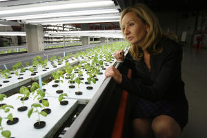 Massive indoor farming takes root