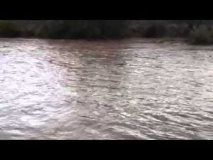 Video: Santa Cruz flowing bank to bank