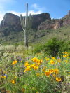 Poppies and Picacho Peak