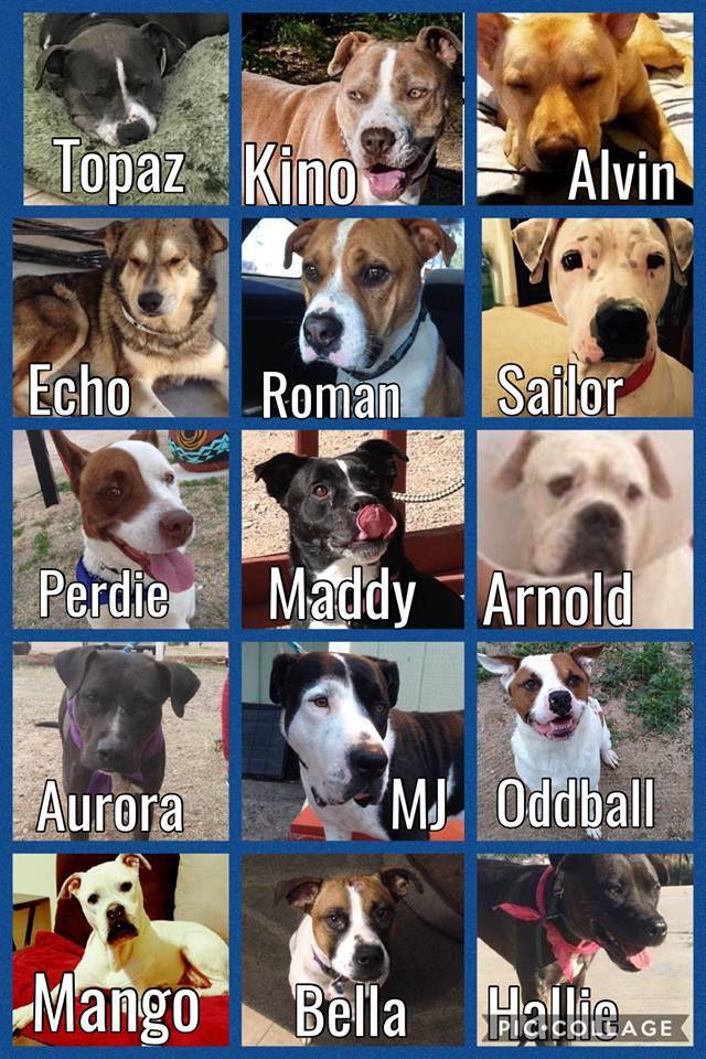 Bridge dogs
