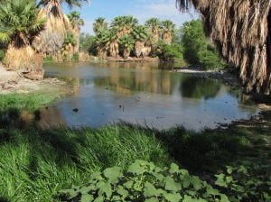 Cool weather, rains, pumping revive Agua Caliente Park