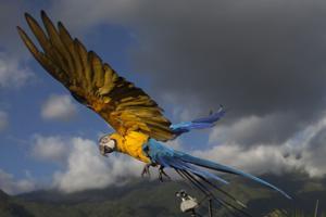 Guacamayas dan armonía y color al caos de Caracas
