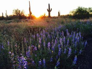 85 brilliant displays of Southwest wildflowers