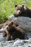 'Bears'