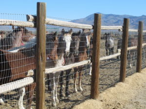 Bill seeks to allow states to manage wild horses