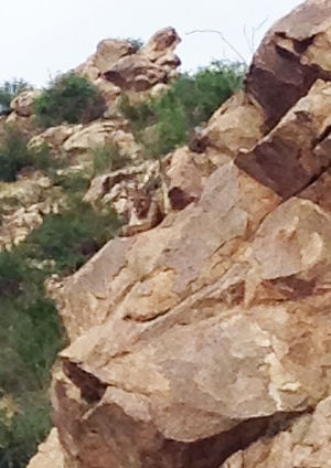 Hiker injured fleeing from mountain lion