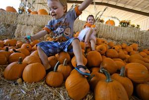 Photos: Marana Pumpkin Patch and Farm Festival