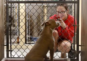 Cost spat could leave more animals on Tucson streets