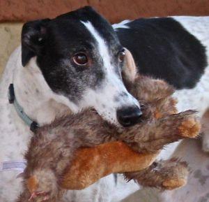Get involved! Greyhounds 101