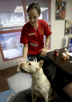 Centsible Mom: Prices hiked on Valley Fever medicine for dogs